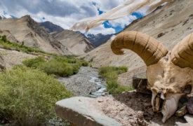 ladakh_2016_nina_web-88